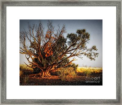 Morning Light Framed Print by Arne Hansen