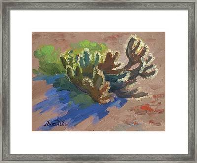 Morning Light Cholla Framed Print by Diane McClary