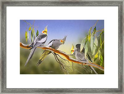 Morning Light - Cockatiels Framed Print