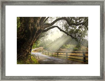 Morning Light Framed Print by Debra and Dave Vanderlaan