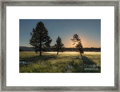 Morning Light In Yellowstone Framed Print by Sandra Bronstein