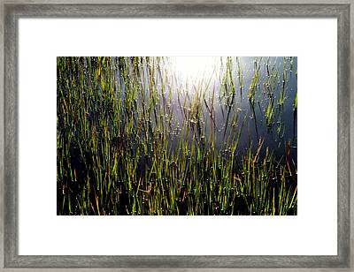 Morning Light Of God Framed Print by Karen Wiles
