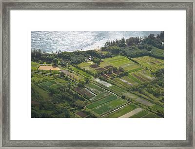 Morning Light Over Kauai Taro Fields Framed Print by Kai Hyde