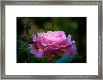 Framed Print featuring the photograph Morning Light by Patricia Babbitt