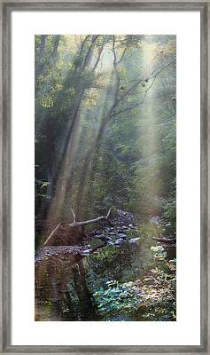 Morning Light Framed Print by Tom Mc Nemar