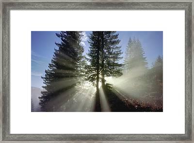 Morning Love Framed Print by Daniel Furon