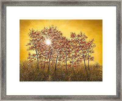 Morning Maples Framed Print