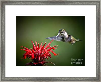 Morning Meal Framed Print by Cheryl Baxter