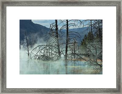 Morning Mist At Mammoth Hot Springs Framed Print by Sandra Bronstein