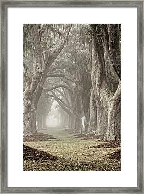 Morning Mist Avenue Framed Print by Barbara Northrup