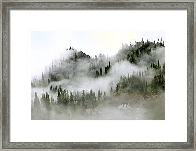 Morning Mist In Olympic National Park Framed Print by King Wu