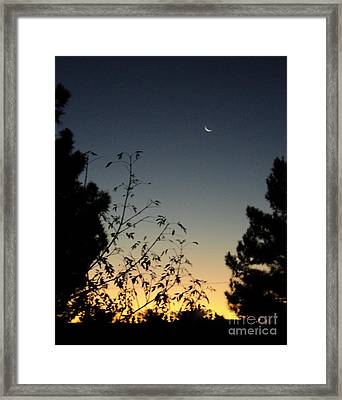 Morning Moonshine Framed Print by Carla Carson