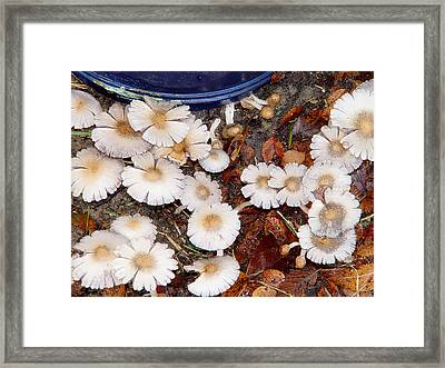 Morning Mushrooms Framed Print