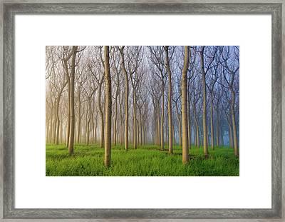 Morning Of The Forest Framed Print