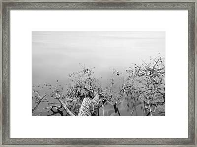 Morning On The Lake Framed Print by Dan Sproul