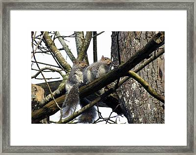 Framed Print featuring the photograph Morning Outing by I'ina Van Lawick