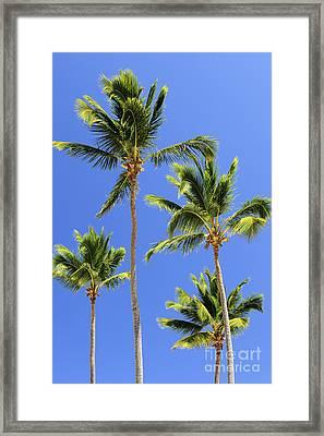 Morning Palms Framed Print