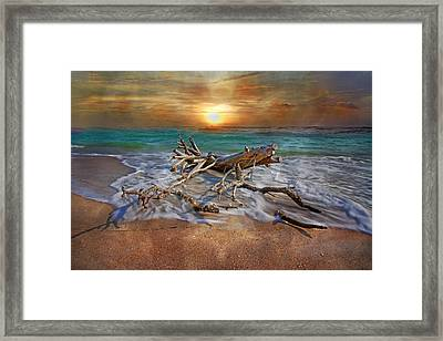Morning Paradise Framed Print by Betsy Knapp