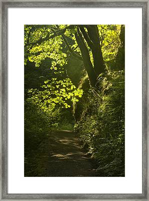 Morning Path Framed Print by Andrew Soundarajan
