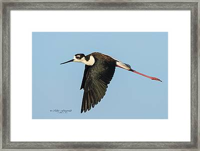 Morning Patrol Framed Print