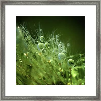 Morning Perls Framed Print