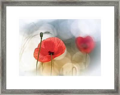 Morning Poppies Framed Print