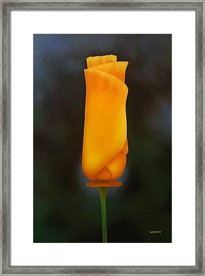 Morning Poppy Framed Print by Michael Wicksted