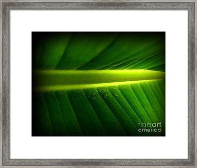 Morning Rain Droplets Framed Print