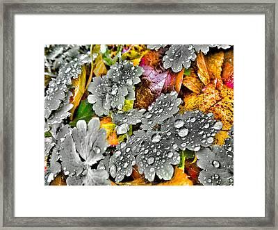 Morning Rain Framed Print by Marianna Mills