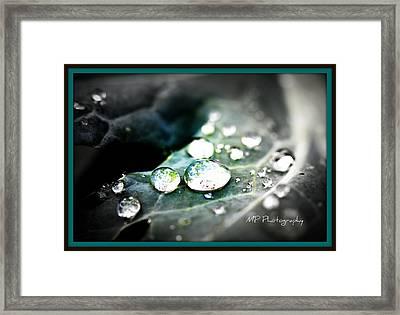 Framed Print featuring the photograph Morning Rain by Michaela Preston