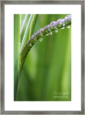 Morning Rain Framed Print by Neil Overy