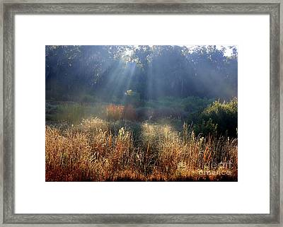 Morning Rays Through Live Oaks Framed Print