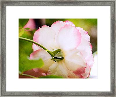 Morning Rose Framed Print by Bobbi Feasel