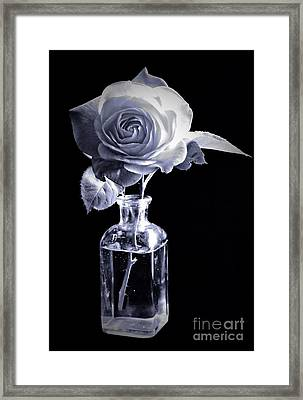 Morning Rose Cyan Framed Print