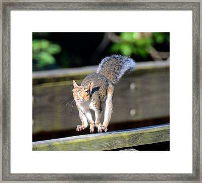 Morning Run Framed Print by Julie Cameron