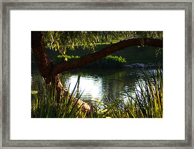 Framed Print featuring the photograph Morning Serenity by Richard Stephen