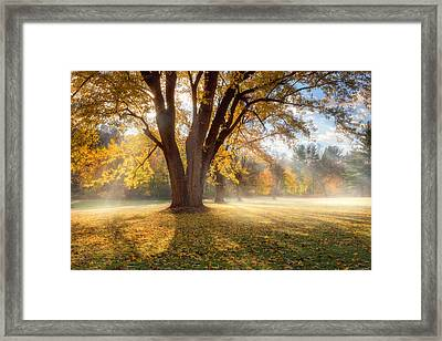Morning Shadows Framed Print by Bill Wakeley
