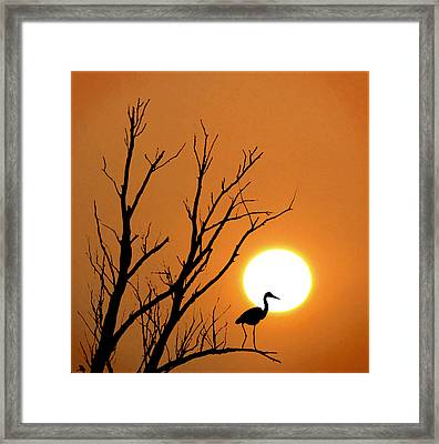 Morning Silhouettes Framed Print by Adrian Campfield