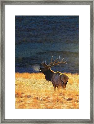 Morning Breath Framed Print