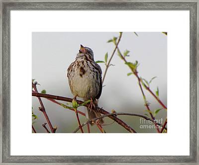 Morning Song Framed Print