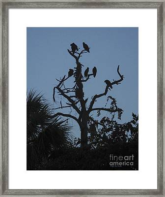 Morning Stirs Framed Print