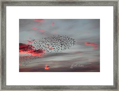 Morning Stretch Iv Framed Print