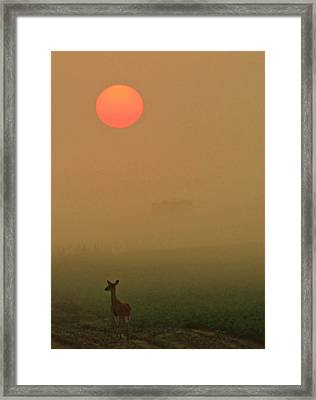 Morning Stroll Framed Print by Sarah Boyd