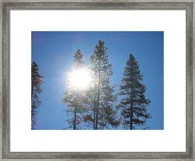 Framed Print featuring the photograph Morning Sun by Jewel Hengen
