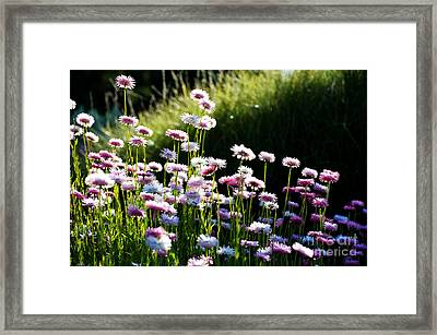 Framed Print featuring the photograph Morning Sun by Yew Kwang
