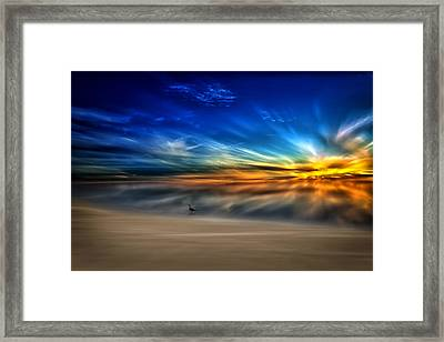 Morning Sunrise With A Seagull Framed Print