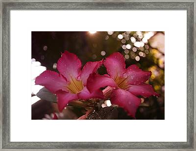 Framed Print featuring the photograph Morning Sunshine And Rain by Miguel Winterpacht