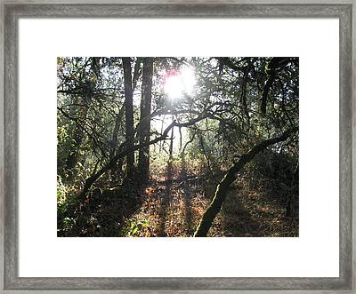 Morning Sunshine Framed Print by Debra Madonna