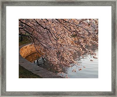Morning Sunshine In A Pond Framed Print