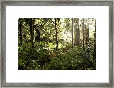 Morning Sunshine In The Forest Framed Print